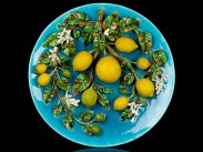 c1900 Very Large Menton Majolica Barbotine Lemons Charger