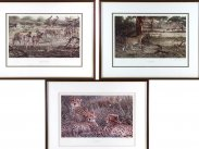 Alan M Hunt Trio of Limited Edition Wildlife Prints