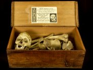 c1905 Human Skeleton in Wooden Case by Adam Rouilly & Co London