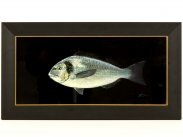 c2010 Framed Gilt Head Sea Bream Oil Painting by Tim Thompson