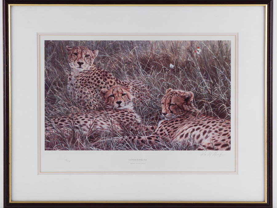 Tender interlude, limited edition tiger print by wildlife artist.